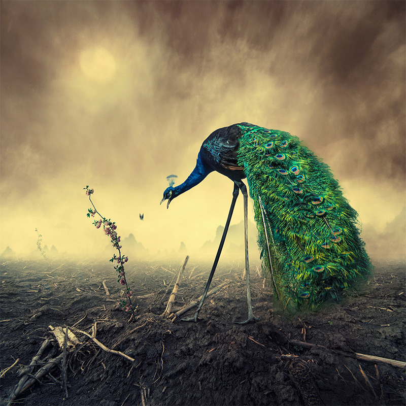 Surreal Photo Manipulations by Caras Ionut (8 pics)