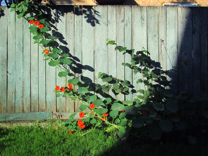 декорировать забор