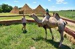 Верблюд на бахче Пономаревых.jpg