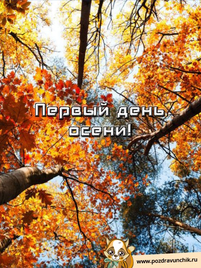 Первый день осени. Кроны деревьев пожелтели