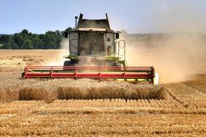идёт сборка пшеницы