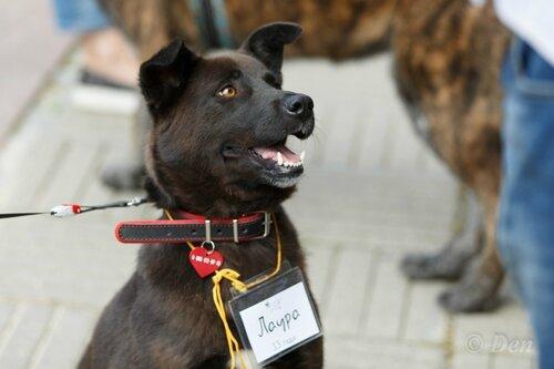 Лаура собака из приюта догпорта
