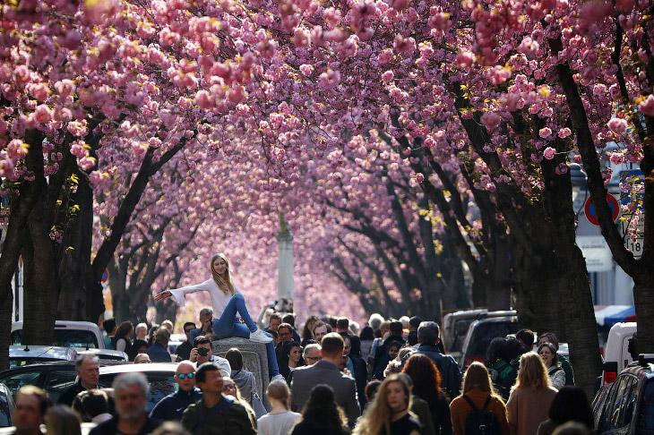 2. Нарциссы в паркев Лондоне, Англия, 11 марта 2017. (Фото Neil Hall | Reuters):