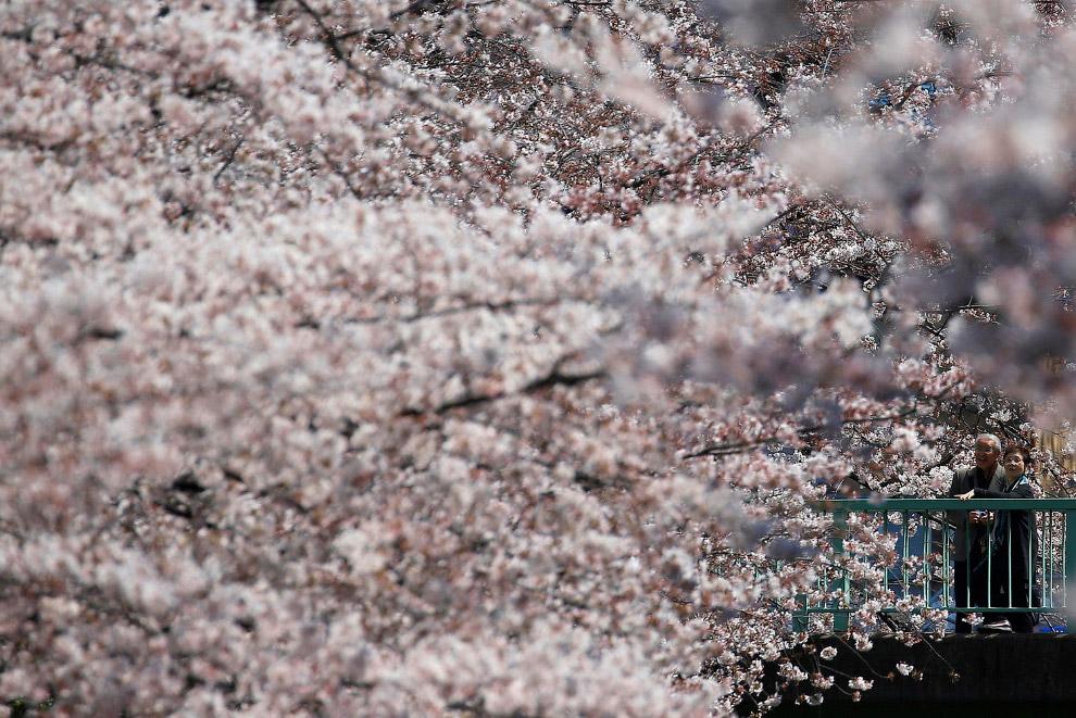 9. Весной случаются ледяные дожди — атмосферные осадки, выпадающие из облаков при отрицательной