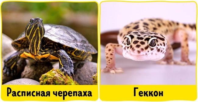 © depositphotos  Гипоаллергенными являются черепашки и рептилии , вроде ящериц или хамелеонов