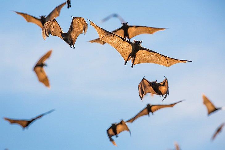 Летучие мыши — крупная группа летающих животных, чей образ жизни сильно отличается от птичьего,