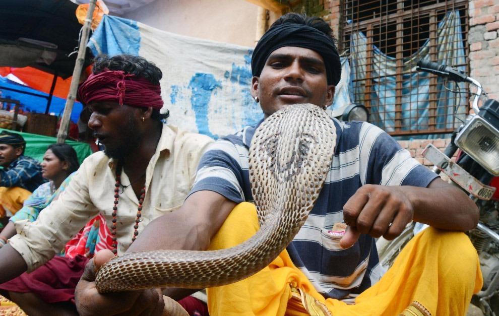 Встретить змею на пути считается большой удачей, особенно для незамужних девушек — это верная п
