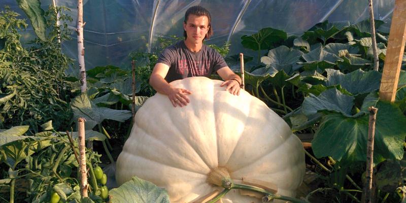 21-летний парень из Подмосковья купил в США за 100$ семечко и вырастил тыкву весом 400 кг