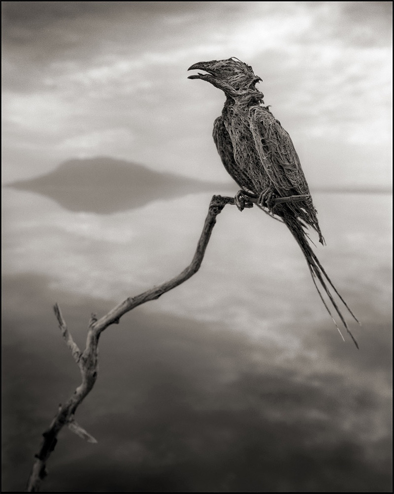 Calcified Songbird, Lake Natron, 2012 Lake Natron in northern Tanzania is one of the harshest enviro