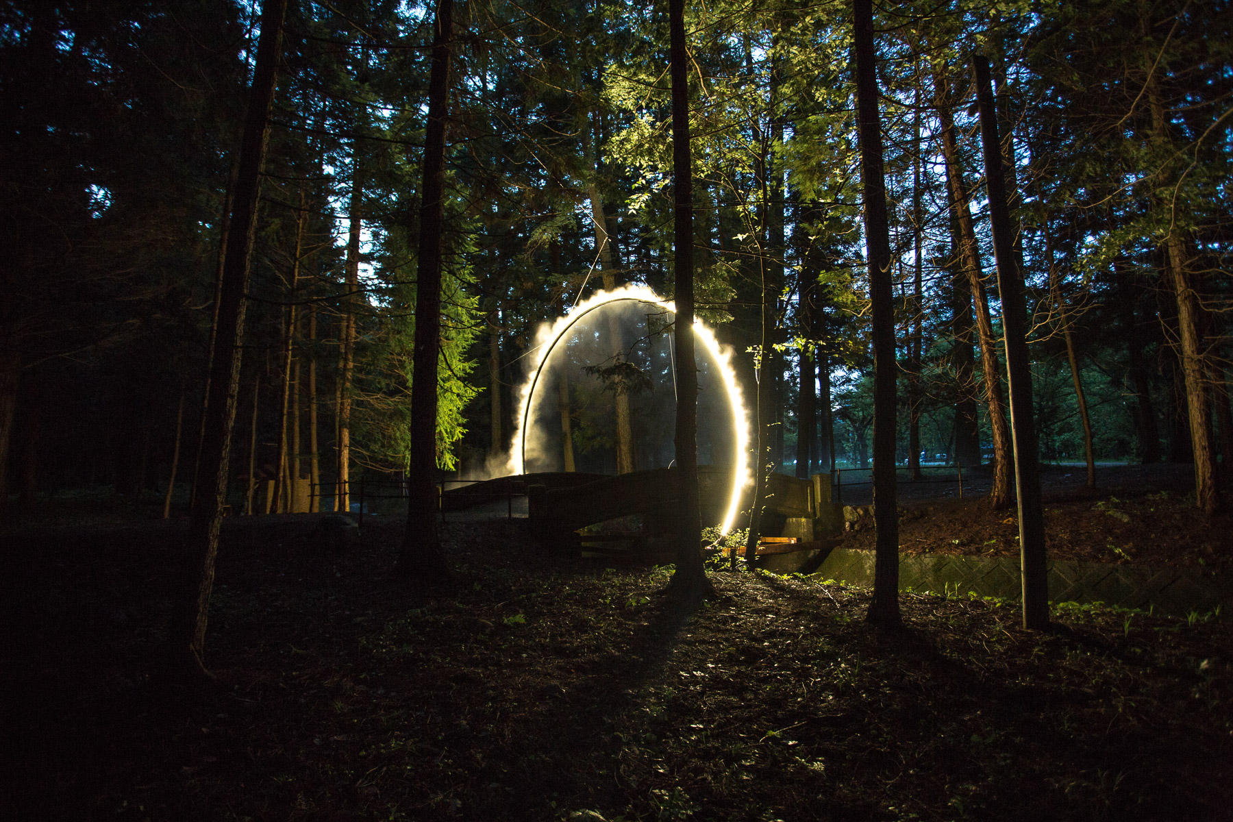Mystical Arc in the Forest by James Tapscott
