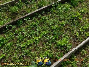салат в сорняке