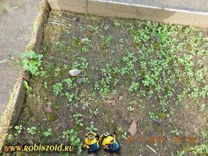 грядка с сорняками