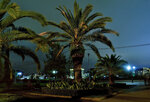 Пальма на набережной