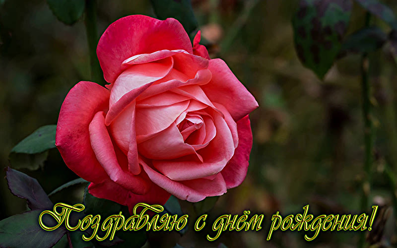Поздравления с рождением