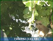 http//img-fotki.yandex.ru/get/236988/170664692.16c/0_194cb2_1a43c3db_orig.png