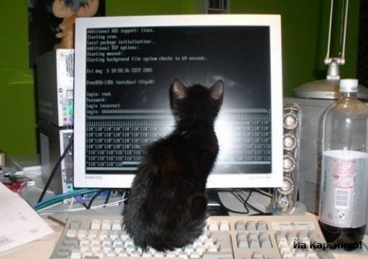 Открытка. С днем программиста. Сейчас все усвоим! Котенок перед монитором