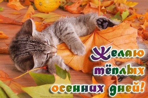 Открытки. Желаю теплых осенних дней!