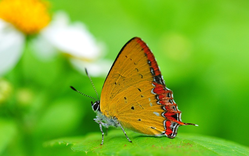 Открытки. День красоты. Красота бабочки