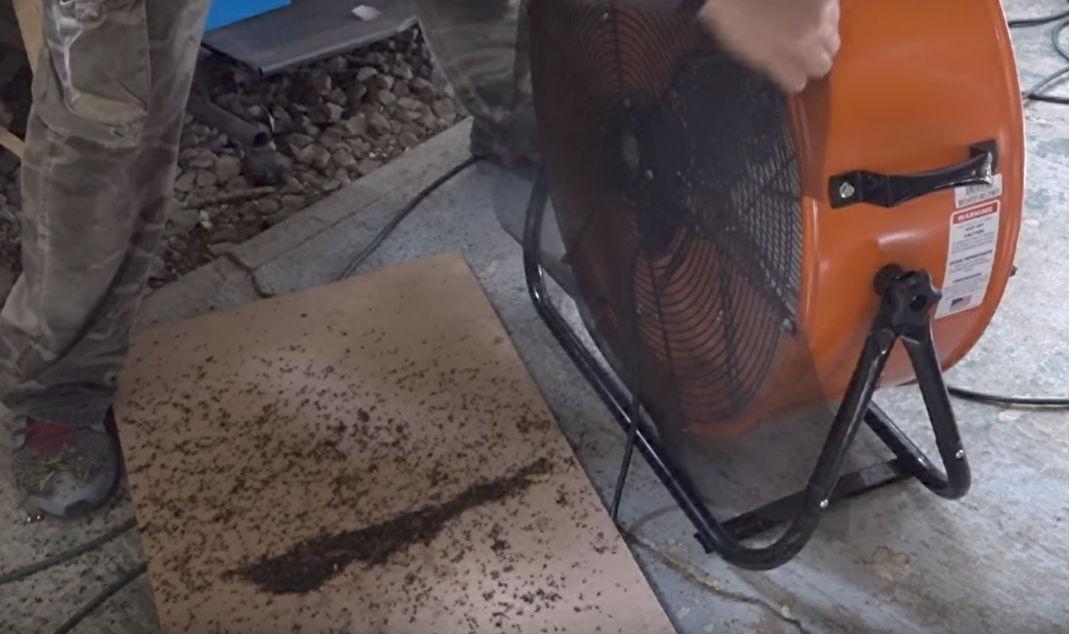 Американец убивает 4 тысячи комаров каждую ночь, используя свою собаку как приманку