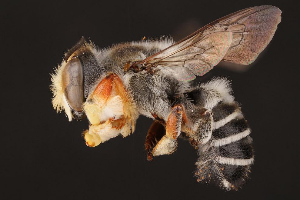 9. С пчёлами было с древности связано огромное количество мифов и легенд. Так, по мнению древни