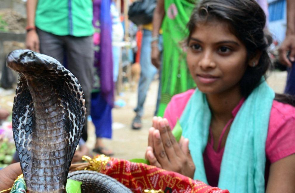 Змеиный фестиваль Nag Panchami 2017.