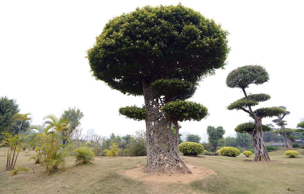 23. О необычном облике этого дерева в Африке есть легенда. Однажды между Богом и баобабом произ