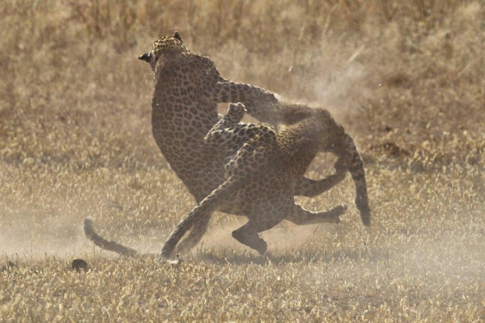 9.  «Они сражались всего несколько секунд. Один начал было уходить, но другой не позволил ем