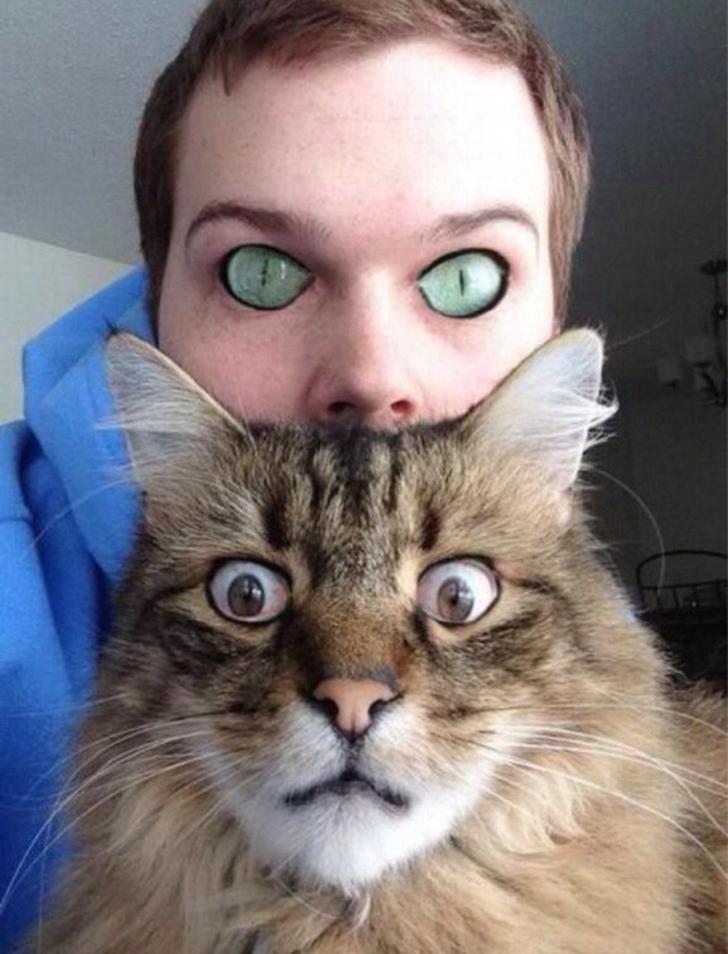 Коты в ужасе.
