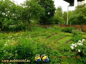 огород перед дождём