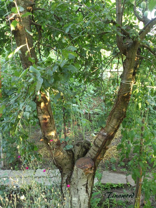 деревья-7.jpg