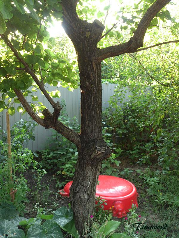 деревья-9.jpg