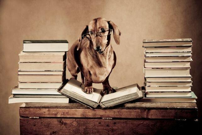 Жизненные перемены: ваша собака и вы