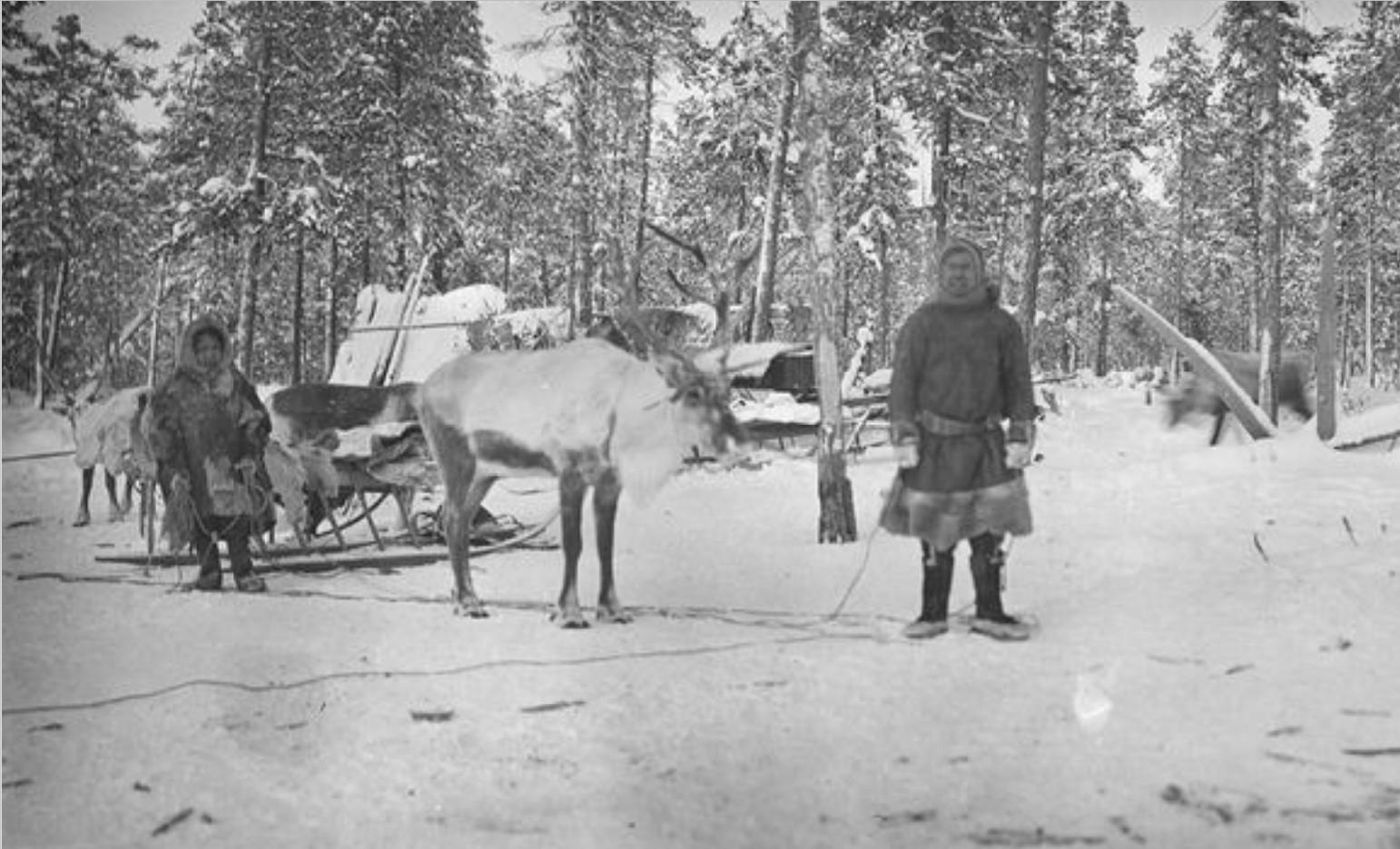 60. Андреев и другие самоеды с оленями