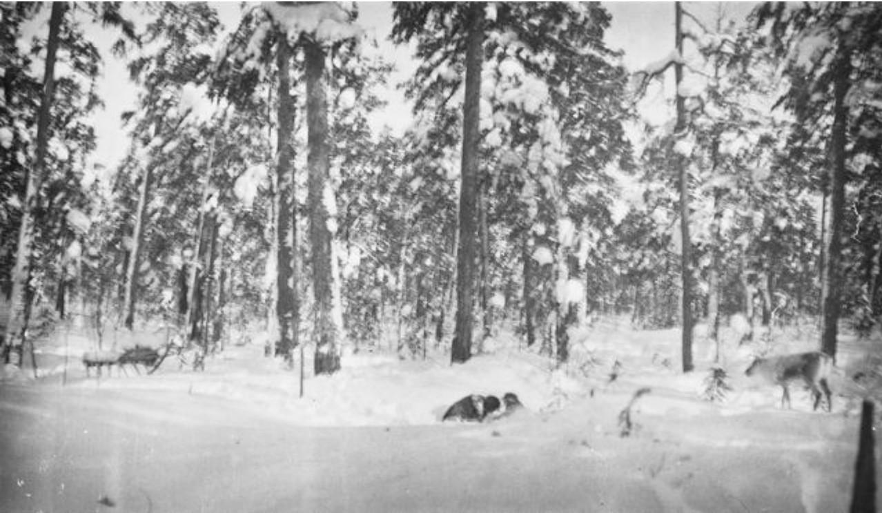 155. Олень в зимнем лесу