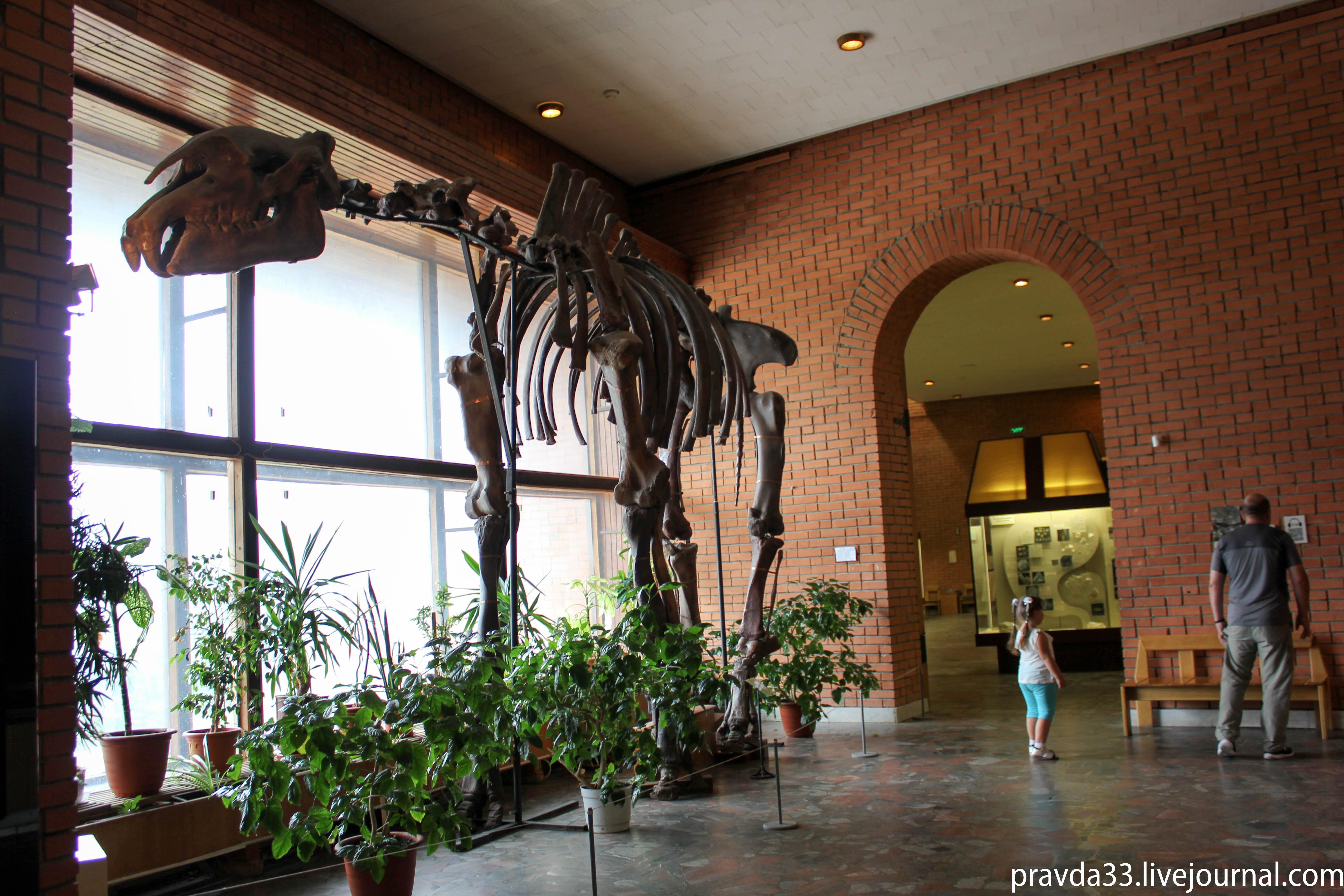 Музей палеонтологии-12.jpg