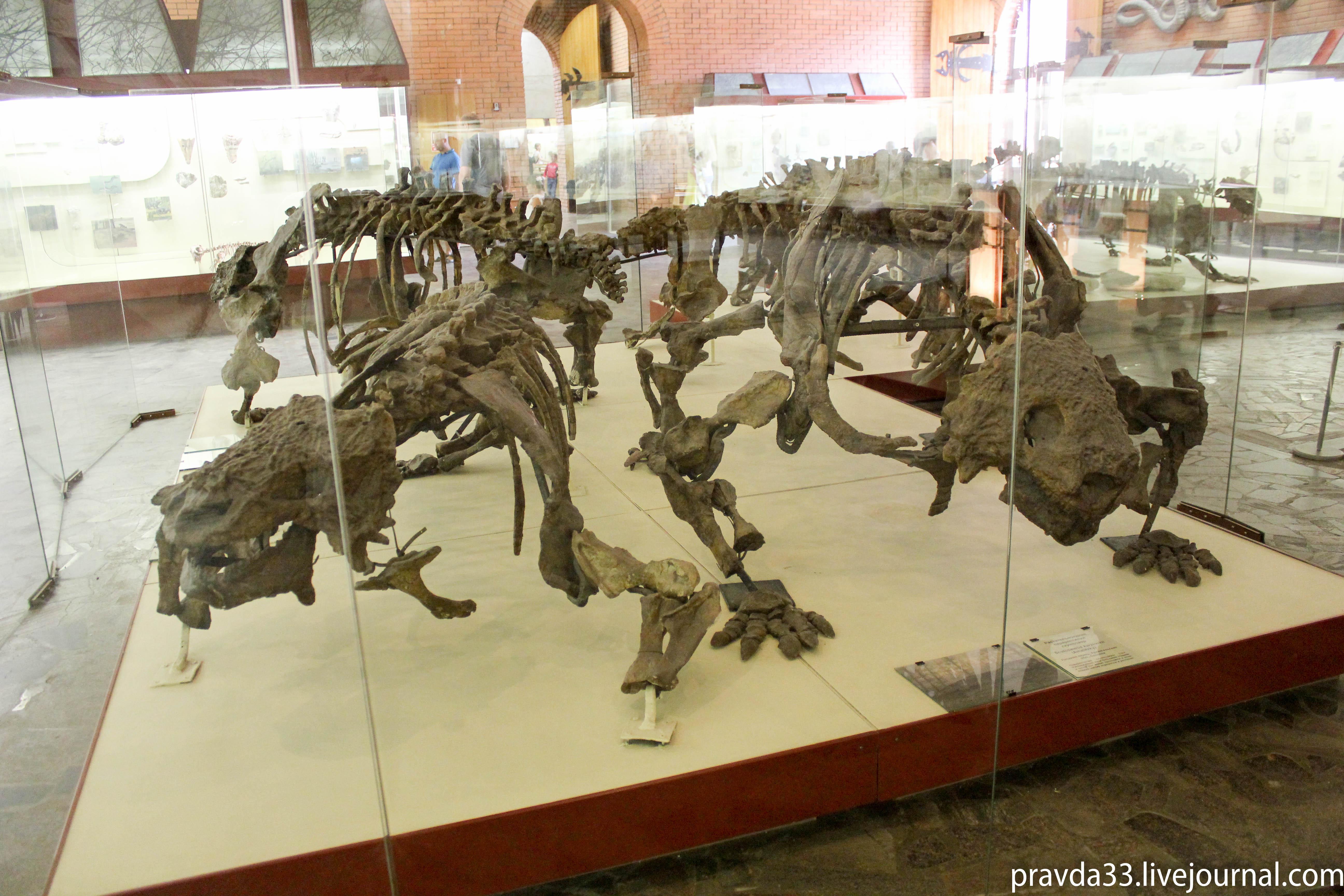 Музей палеонтологии-25.jpg