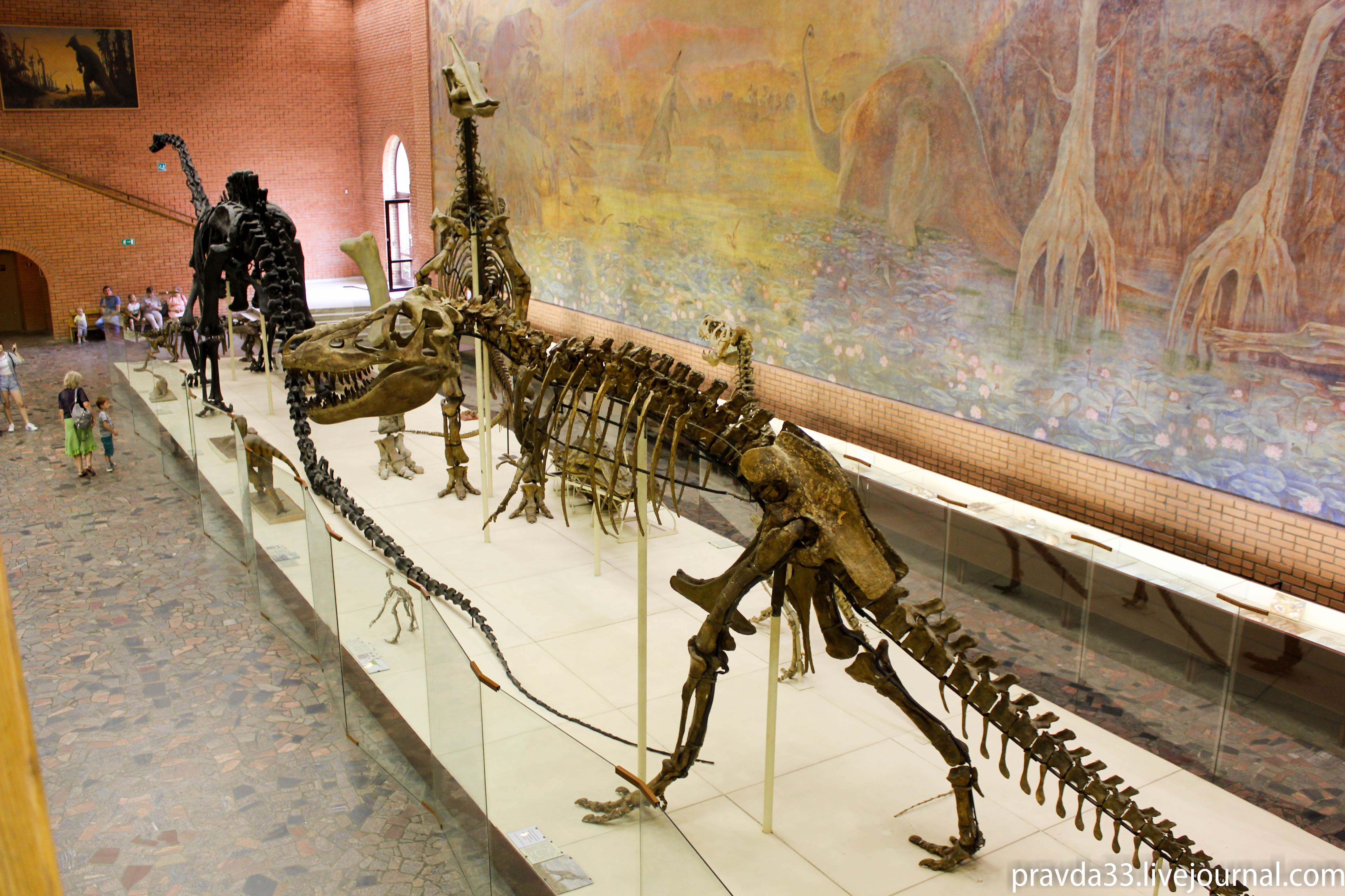 Музей палеонтологии-37.jpg