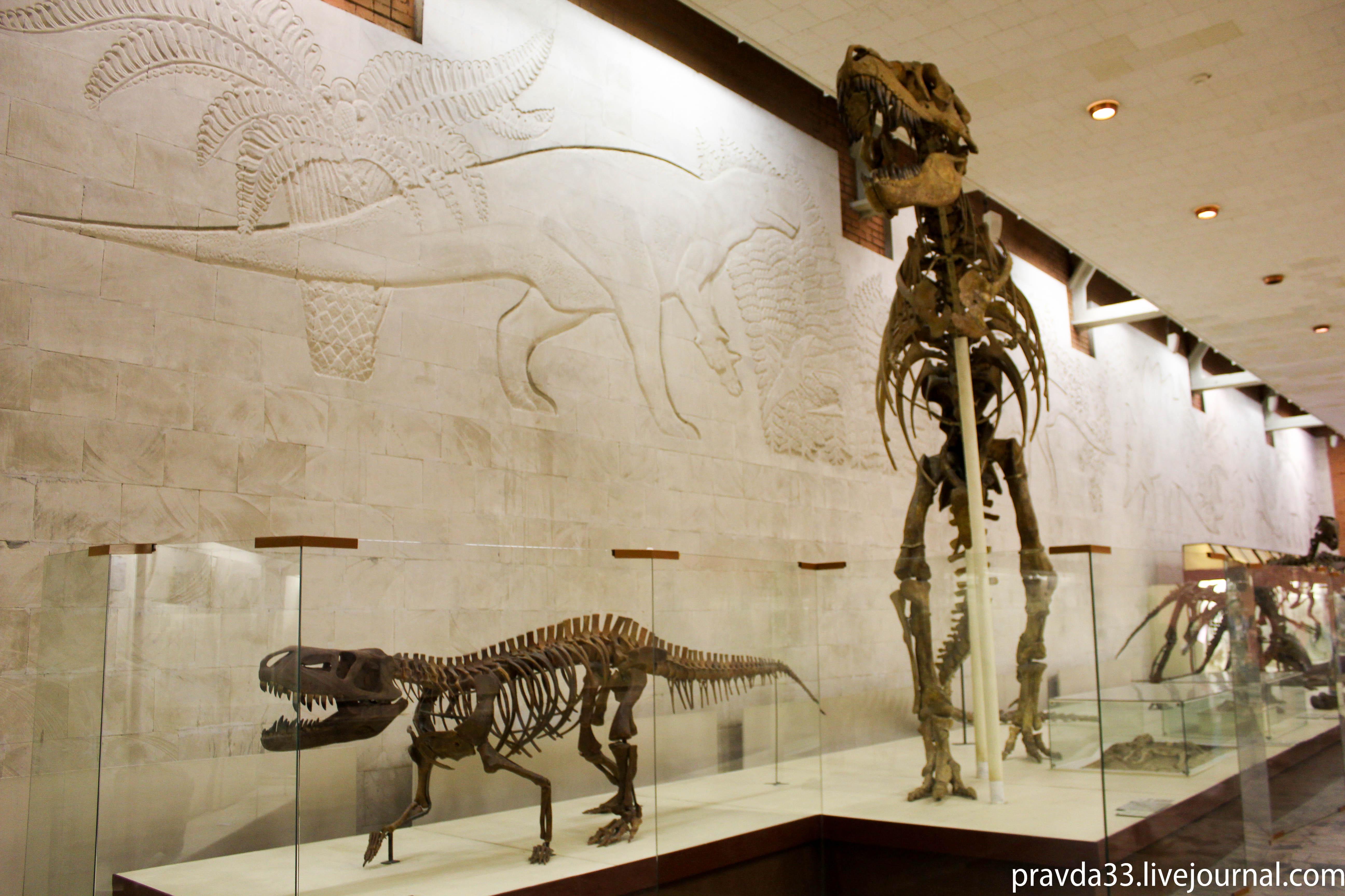 Музей палеонтологии-39.jpg