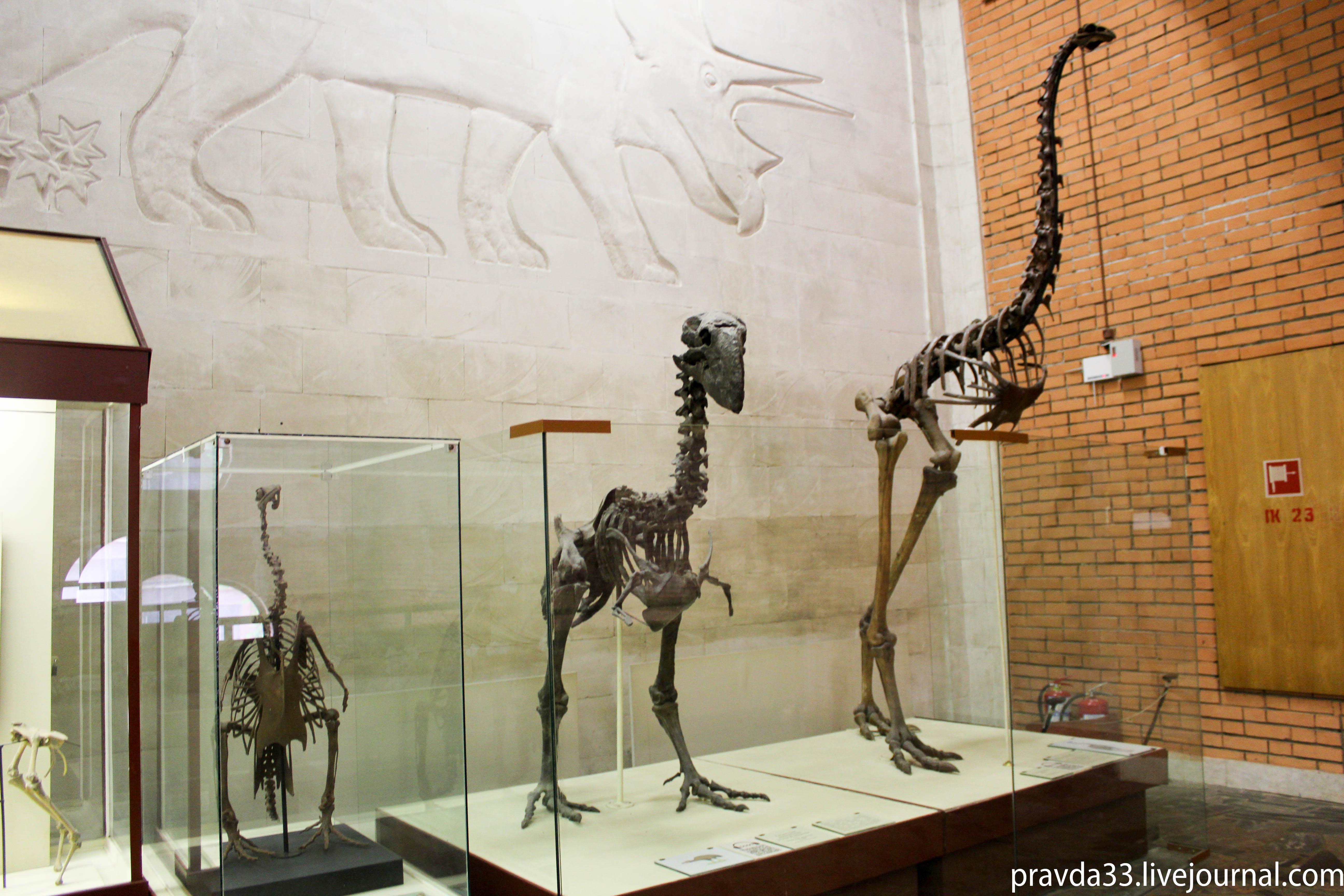 Музей палеонтологии-47.jpg