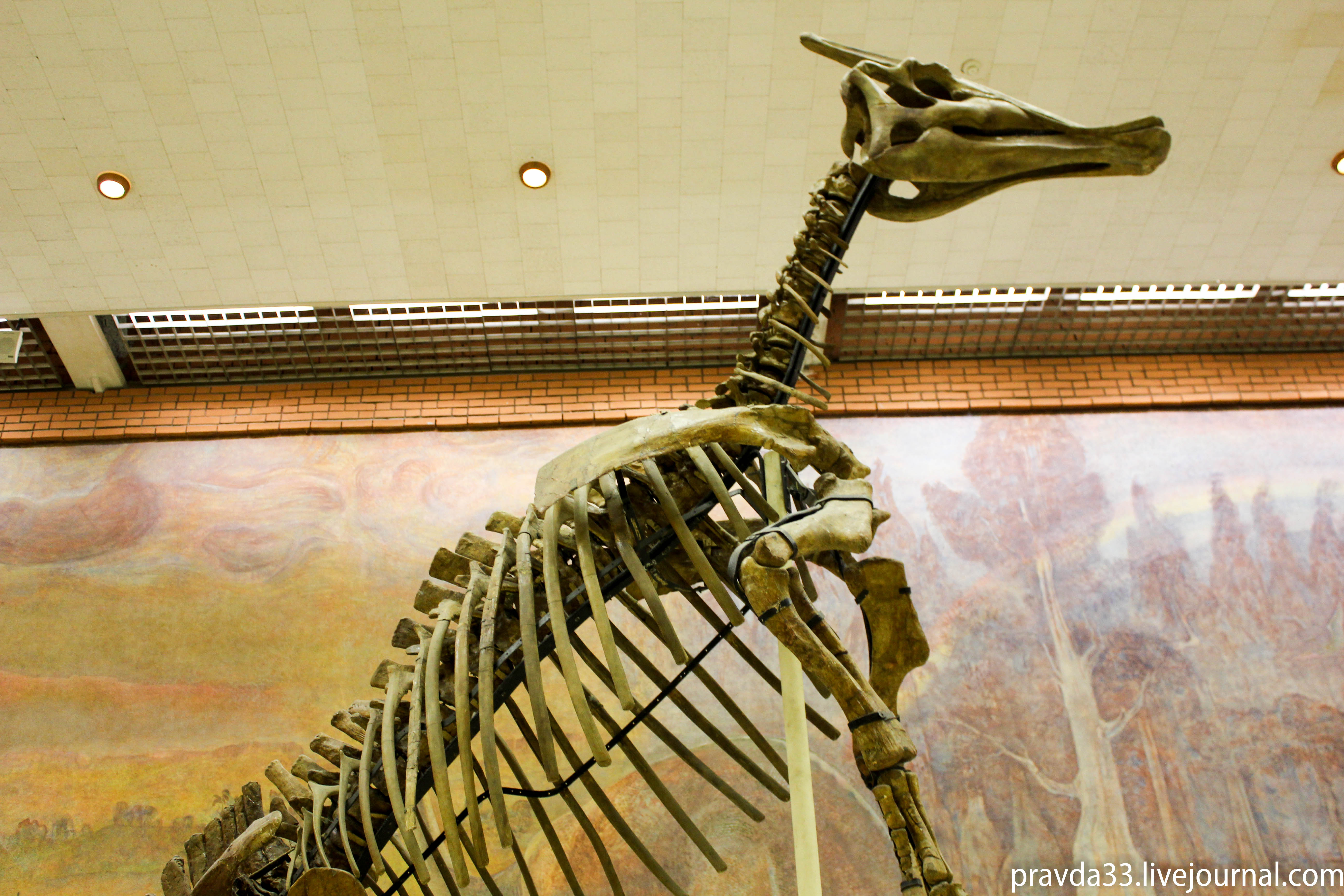Музей палеонтологии-56.jpg
