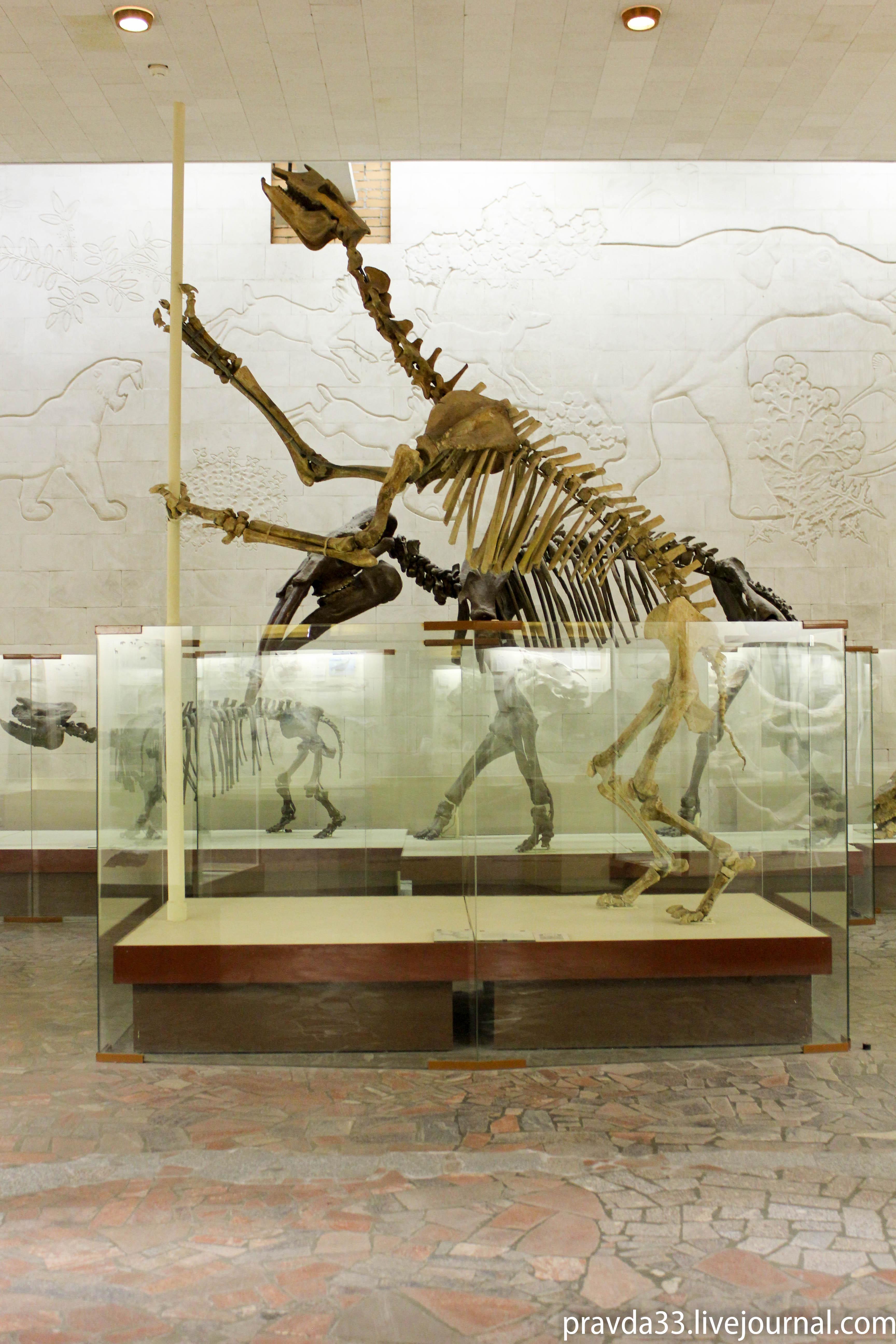 Музей палеонтологии-73.jpg