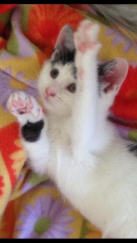 Китри кошка из приюта догпорт фото