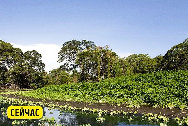 © depositphotos  Никарагуа— единственное место вмире, где проживают пресноводные акулы. Вию