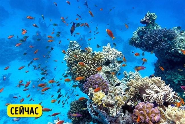 © depositphotos  Глобальное потепление несет для Большого Барьерного рифа немалую угрозу: при