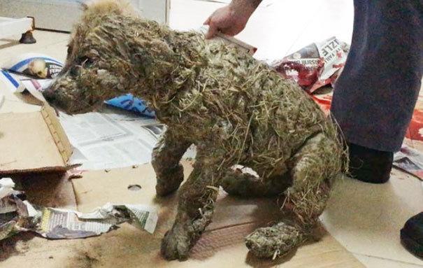 Застывший клей сковал тело пса, словно бетон, так, что он мог пошевелить только языком.
