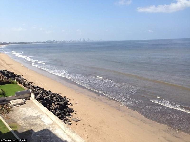 Работа по очистке пляжа закончилась в мае 2017 года. «Пляж, наконец, чистый. Наши усилия принесли св