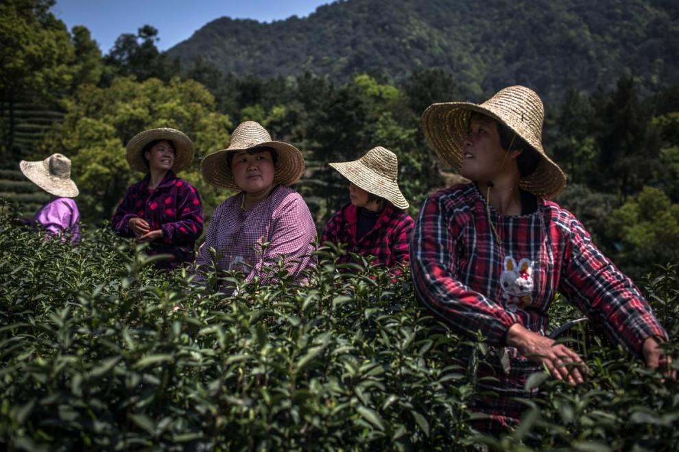 Сезонные работницы ужинают после окончания трудового дня на чайных плантациях в окрестностях Ханчжоу