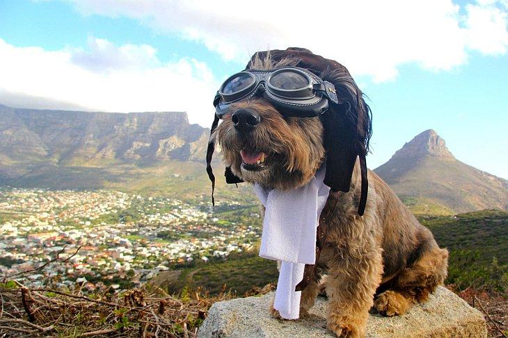 Оскар был бездомным псом и жил в питомнике для бездомных собак в Кейптауне, ЮАР.  У Кёльнско