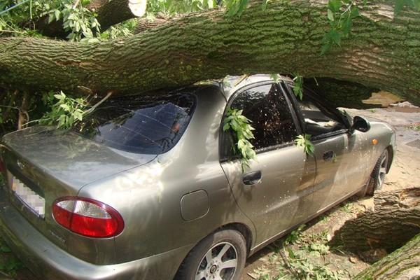 на машину упало дерево.jpg