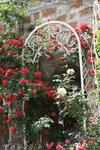Розы в арках